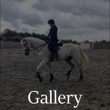 05 gallery